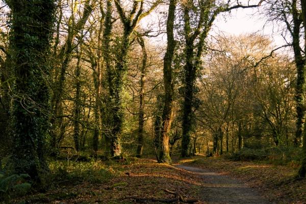 Lanhydrock Woods by warbstowcross