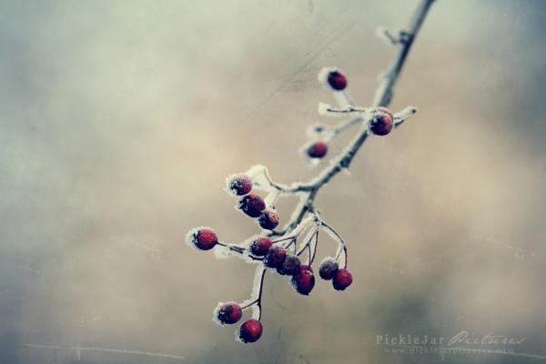 Hoar Frost by rachepix