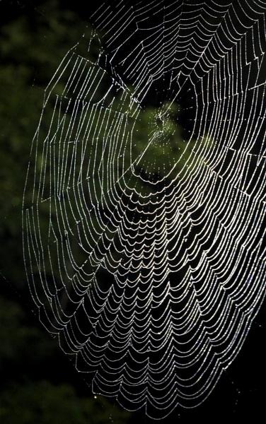 Spider Web by Night by Elfix6