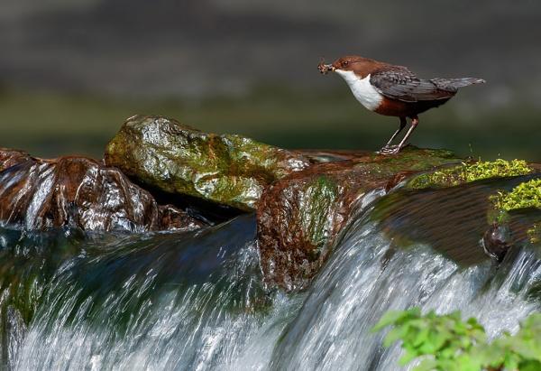 Dipper Falls by Tom-Melton