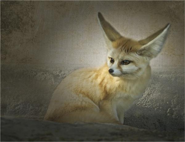 Small Fox by Daisymaye