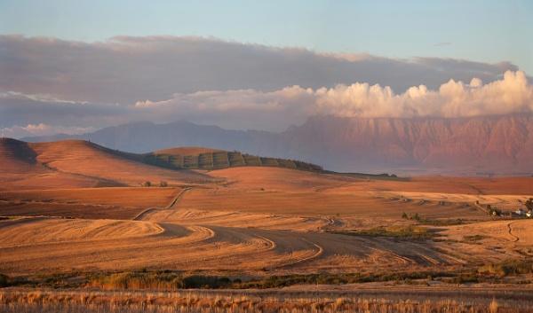 Evening Sunlight. Western Cape Wheatlands. by accipiter