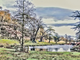 Bradgate Winter Scene