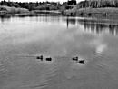 The Pond. by Gypsyman