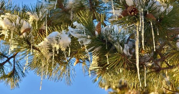 winters beauty by 1nikongirl