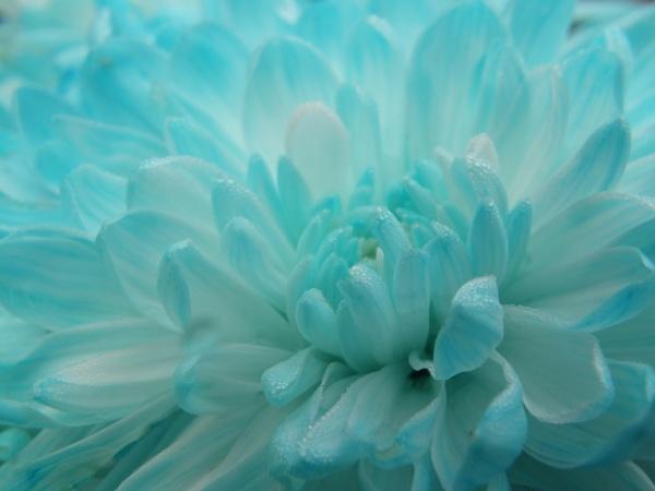 feeling blue by annie2020