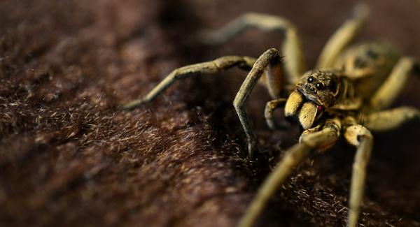 Spider by Ayoob