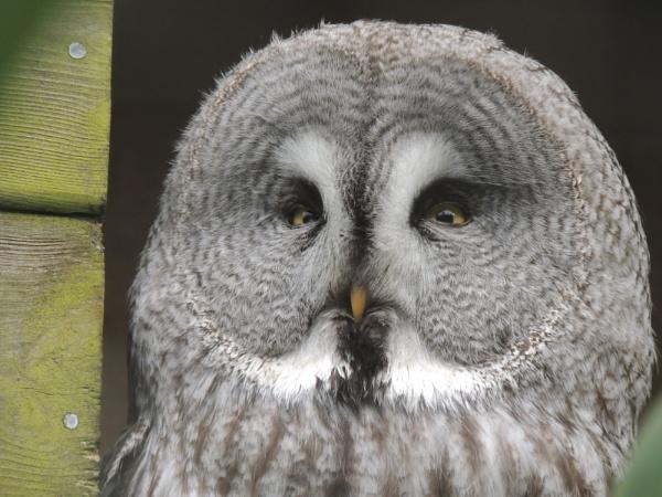 Owl eyes by jono1975