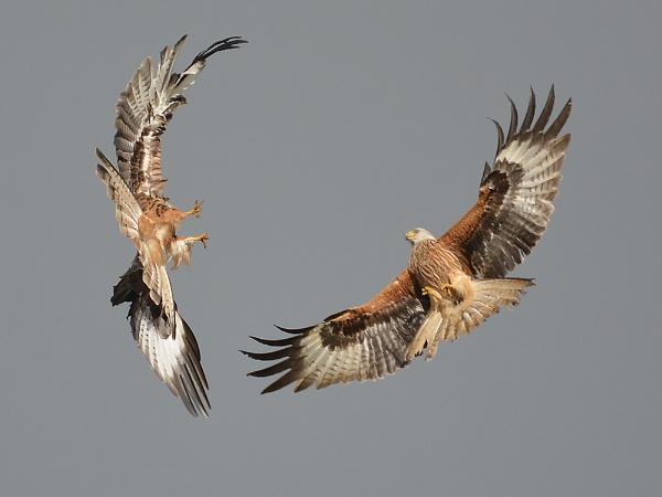 Kites by daibev