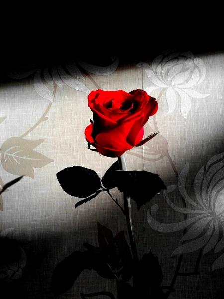 A Valentines Treat by jamminshots