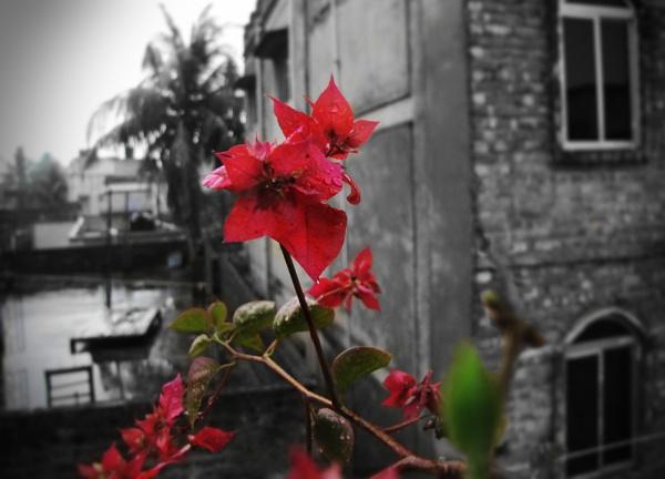 Color Delight by Dibyajit