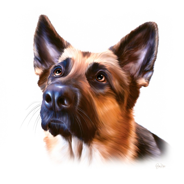 German Shepherd by GarryWestPortraits