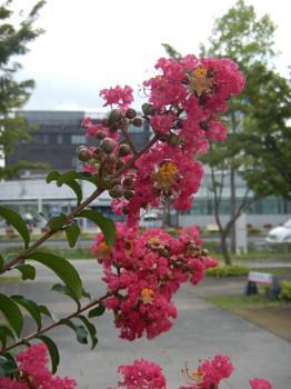 Tsukuba 2012
