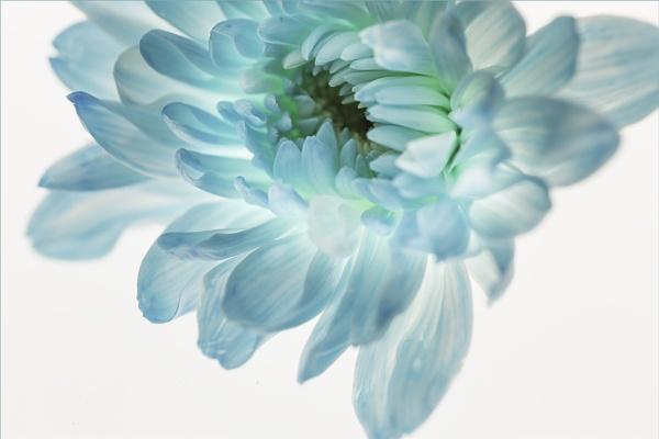 Blue Pastel by gregl