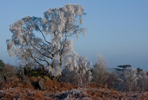 Hoar frost by Gazzten