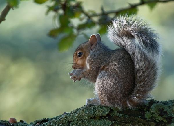 Squirrel?? by Gazzten