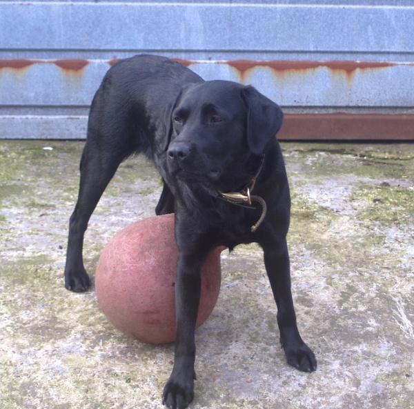 MY BALL !!! by crobncarol