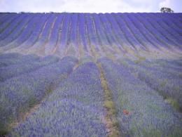 Provence-en-Hertfordshire