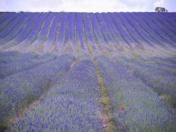 Provence-en-Hertfordshire by zazzycat