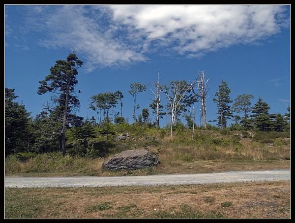 Point Pleasant Park by JimV