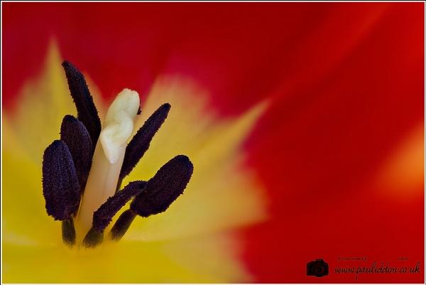 Tulip Centre by Paul_Iddon
