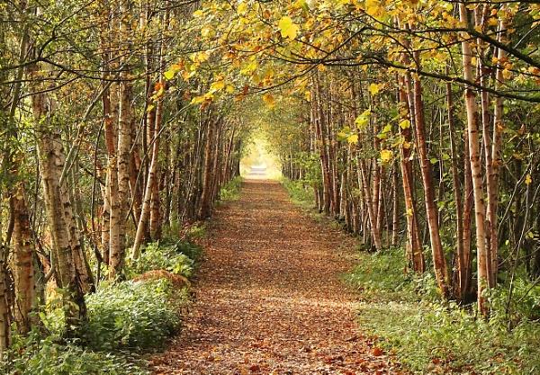 Leafy lane by Graysshootin