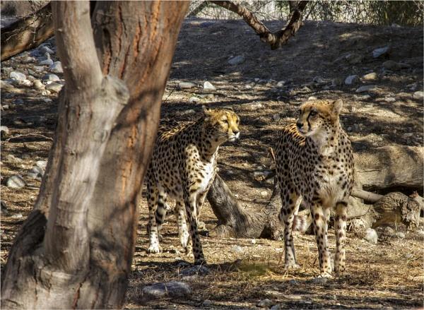 Cheetah Girls by Daisymaye