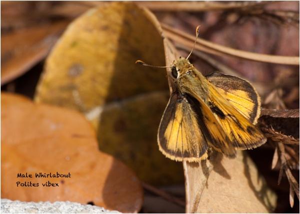 Butterfly by mickyr