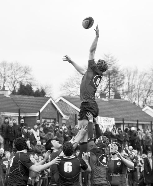 Flying High by robert5