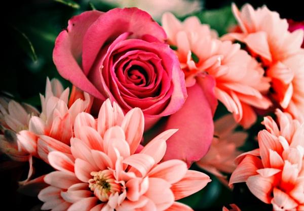flowers by toniiixx