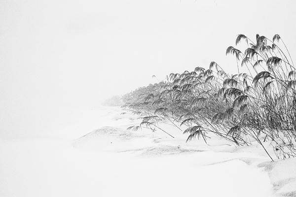 Wintrer Reeds by llareggub