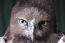 What ya lookin at? by Steptoe