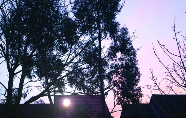 Morning Street Light by Broken
