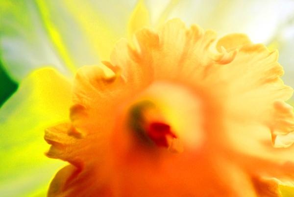 Sunlight and Flower 2 by Broken