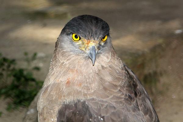 Angry Bird by sreejib77
