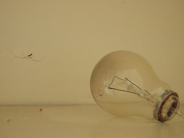 Spider & the Lightbulb. by bcawood