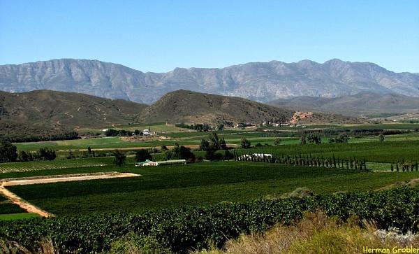 Winelands by Hermanus