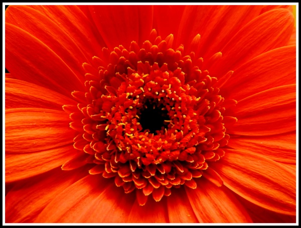 Burst of orange by ColleenA