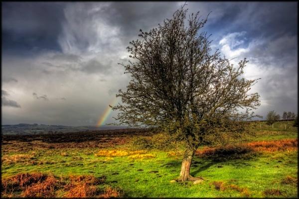 Rainbows End by platzy