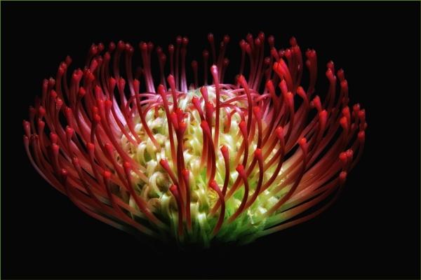 Glowing Bloom by hi14ry