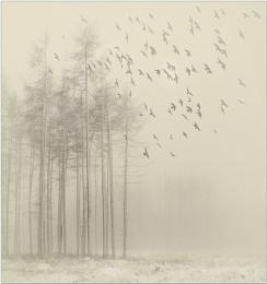 A Winter Morning.....