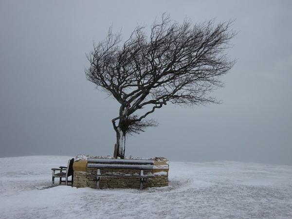 Windswept Tree by Glostopcat