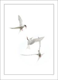 Arial Ballet
