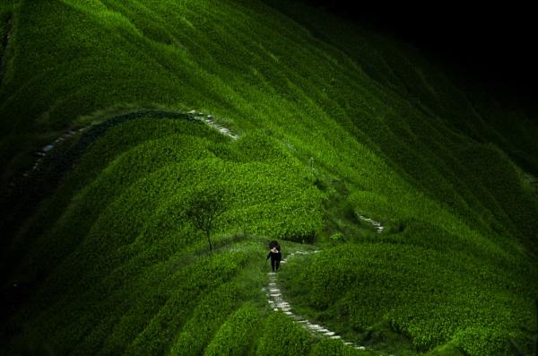 longsheng rice fields by ianwebb