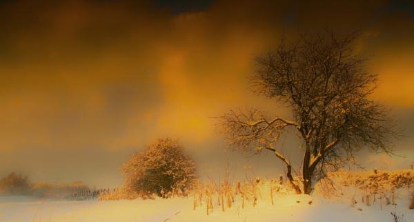 Winter HDR by Trevrox