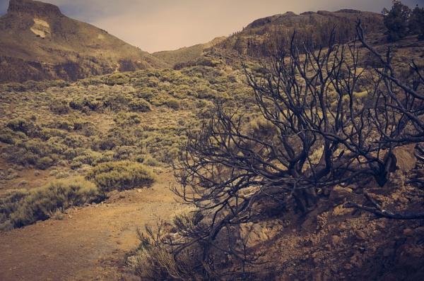 Wildness by olesyak