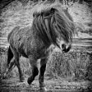 Weathered mountain pony by wynn469