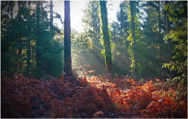 Deep Forest Rays by jujupops