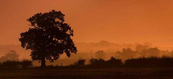 \'Lone Tree Silhouette\' by bart_hoga