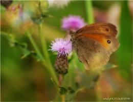 Golden Brown texture like sun...